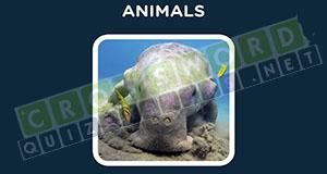 crossword quiz answers animals level 3